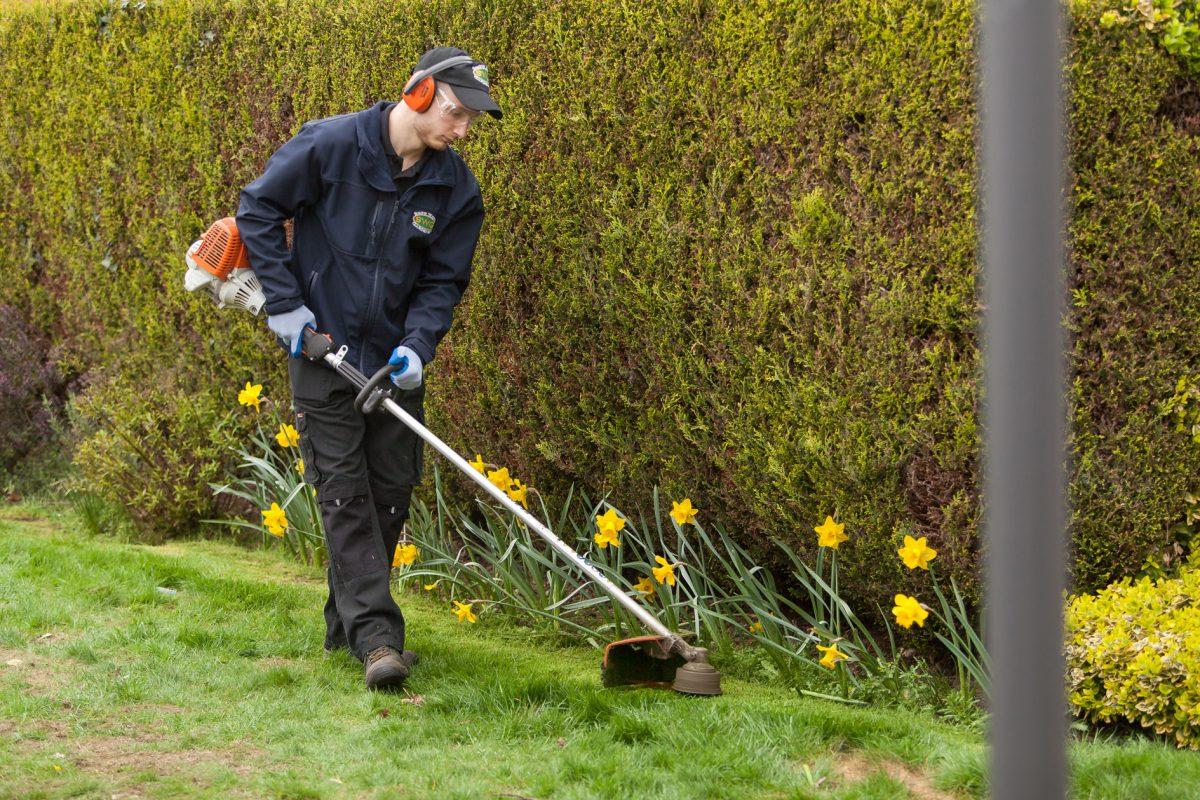 Gardening Weybridge